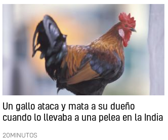 20200125 gallo mata a su dueno pelea de gallos