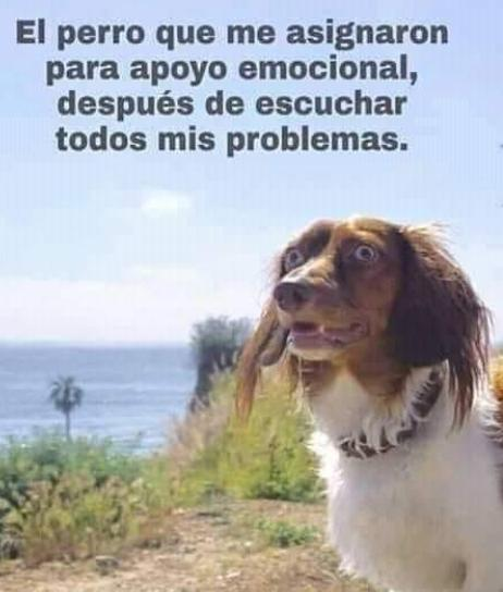 apoyo emocional canino perro con cará de loco