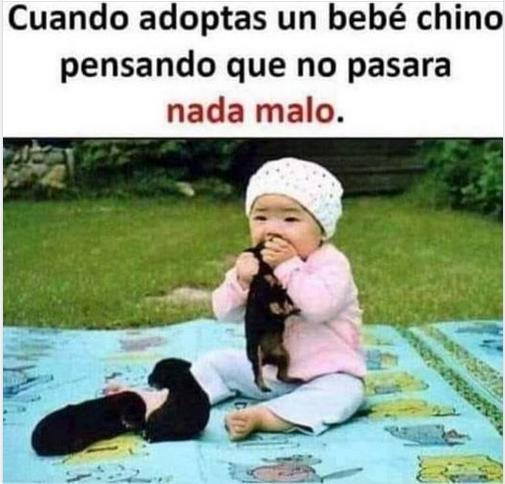 en china comen perro