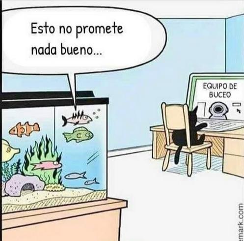 gato compra equipo de buceo en línea acuario pezca diving suite