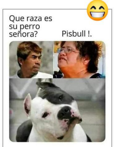 la raza de su perro