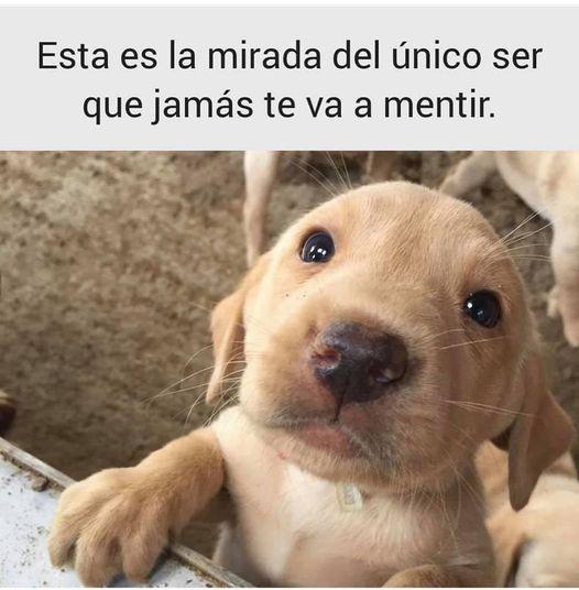 los perritos no mienten