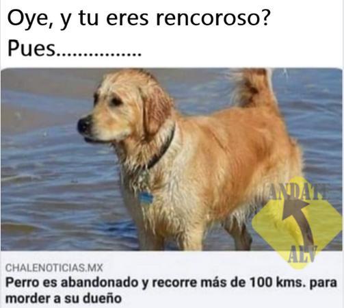 perro recoroso recorre 100 kilómetros para morder a su amo