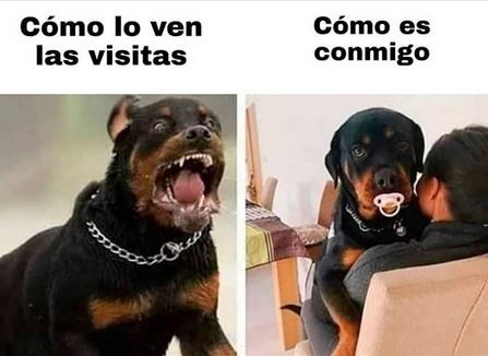 pitbull raza peligrosa de perros tiernos